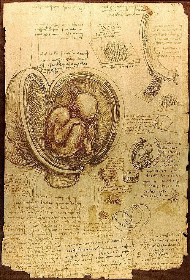 leonardo embryo
