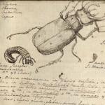 Beetle-e1408811376733-150x150