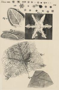 Frozen Urine: Robert Hooke Micrographia