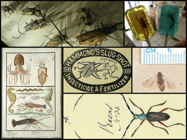 [IMAGES VIA: BIBLIOTHÈQUE DES CHAMPS LIBRES, CALIFORNIA ACADEMY OF SCIENCES GEOLOGY AND ENTOMOLOGY COLLECTIONS, EWEN ROBERTS, AND INTERNET ARCHIVE BOOK IMAGES.]