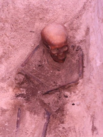 PHOTO: A skeleton found on Beacon Island is believed to be from the Batavia shipwreck massacre. (ABC News: Sarah Taillier)