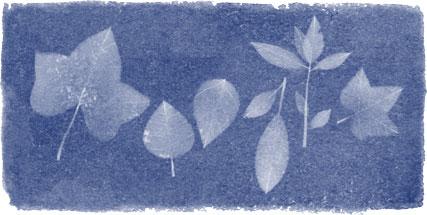 Anna Atkins Google Doodle