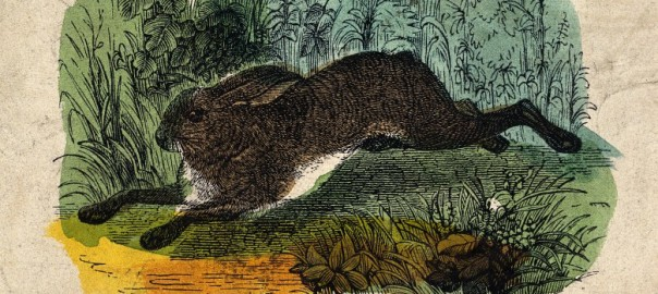 V0021351 A hare. Coloured wood engraving.