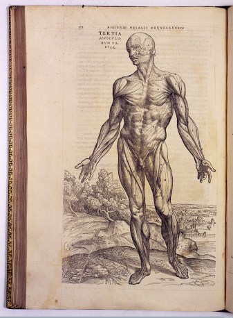 L0021649 A. Vesalius, De humani corporis fabrica Credit: Wellcome Library, London. Wellcome Images images@wellcome.ac.uk http://wellcomeimages.org 'Tertia musculatorum' (third muscle man). De humani corporis fabrica libri septem Andreas Vesalius Published: 1543 Copyrighted work available under Creative Commons Attribution only licence CC BY 4.0 http://creativecommons.org/licenses/by/4.0/