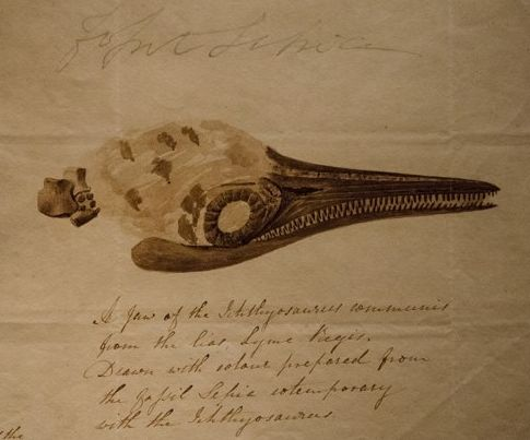 Mary Anning's Ichtyosaurus communis skull, by Elizabeth Philpot, 1814
