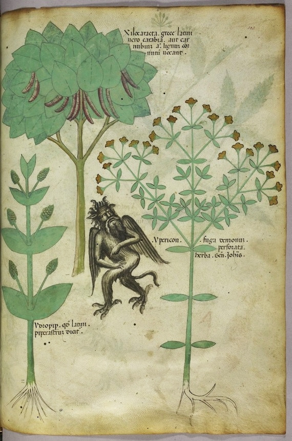 Miniature of plants and a demon: the herb Ypericon, supposed to repel demons.