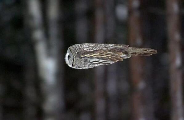Super-Sonic Owl