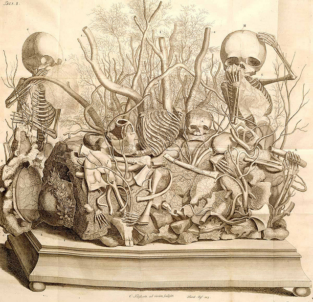 Engraving of a tableau by Frederik Ruysch (1744) Etching with engraving Image credit: . National Library of Medicine.