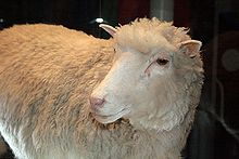 Dolly's taxidermied remains Source: Wikimedia Commons