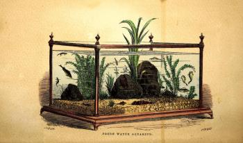 "An aquarium has recently become ""a necessary luxury in every well-appointed household, both of Europe and America."" Henry D. Butler, The Family Aquarium (New York, 1858). Colored frontispiece, Biodiversity Heritage Library."