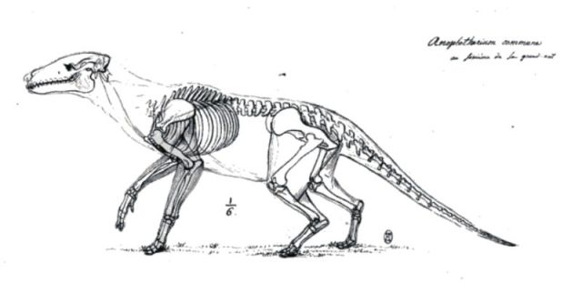 Cuvier´s secret reconstruction of the Anoplotherium commune, shown in lifelike pose with its skeleton, musculature, and body-outline. Source: Forbes