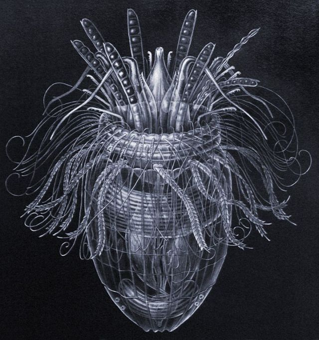 Illustration of Pliciloricus enigmatus by Carolyn Gast, National Museum of Natural History. From a condensed Smithsonian report, New Loricifera from Southeastern United States Coastal Waters