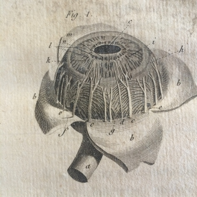 Engraving of the eye in A Complete Physico-Medical and Churugical on the Human Eye and the Demonstration of Natural Vision (Degraver, 1780).