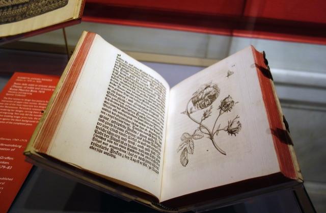 "Maria Sibylla Merian, ""Der Raupen wunderbare Verwandelung"" (""The Wonderful Transformation of Caterpillars"") (1679-83) (photo by the author for Hyperallergic)"