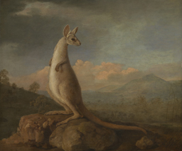 The Kongouro from New Holland (Kangaroo) 1772 by George Stubbs. ZBA5754 National Maritime Museum