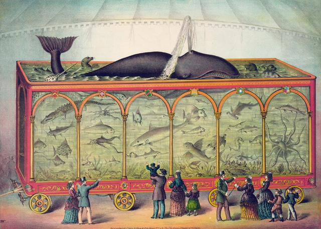 A large travelling circus aquarium filled with sharks, alligators, seals, octopus, narwhal whale and a spouting sperm whale; lithograph, 1873. Photo by GraphicaArtis/Getty