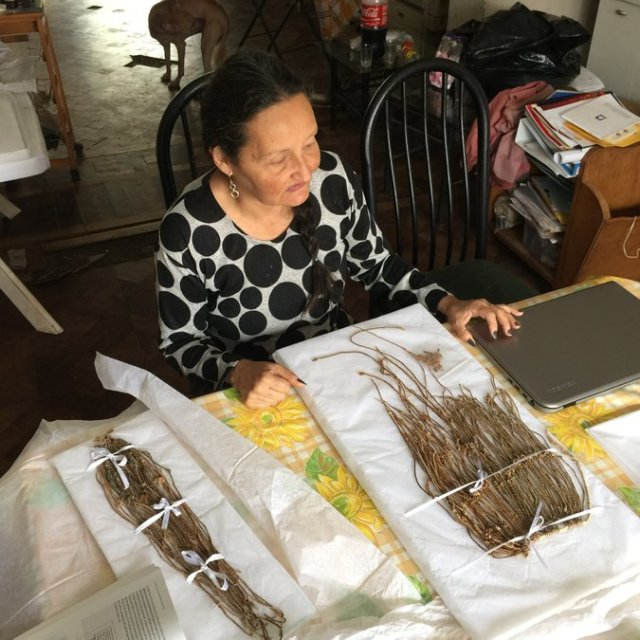 Patricia Landa, an archaeological conservator, painstakingly cleans and untangles the khipus at her house in Lima. Credit William Neuman/The New York Times