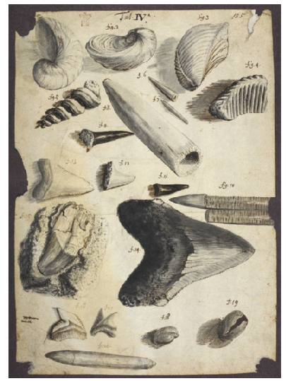 Hooke's drawing of fossil bivalves, brachiopods, belemnites, shark teeth and possibly a reptilian tooth (Copyright © The Royal Society)