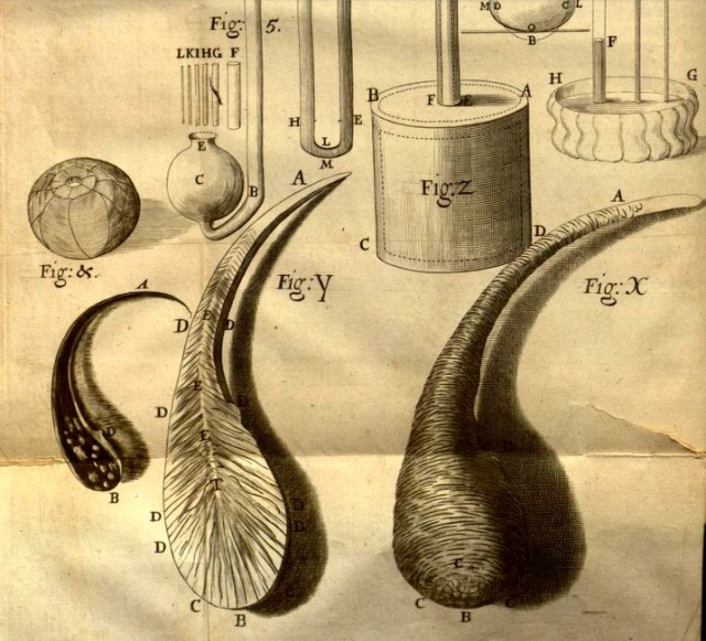 Glass drops or tears coated in glue, after detonation, (cross section is left) from Robert Hooke's Micrographia 1664, between p. 10, 11.