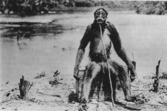 "The rare version of the complete photography of de Loys´ ape – ""Ameranthropoides loysi"", from MONTANDON 1929 (image in public domain)."