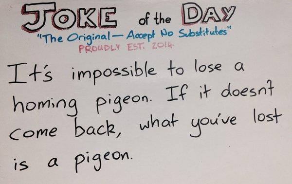 Homin Pigeon