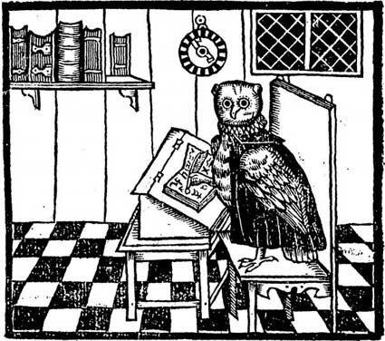 Busy Owl