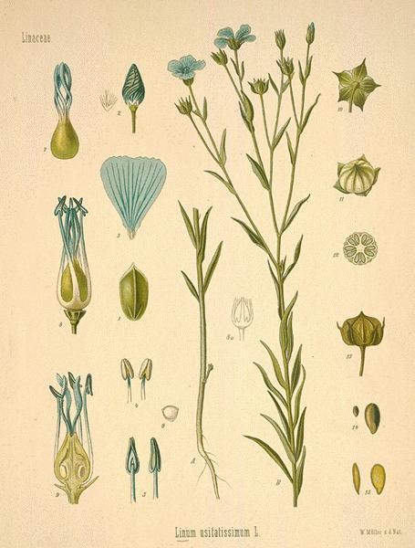 flax--23-l