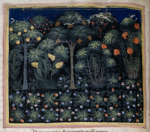 A medieval garden – from British Library MS Royal 6 E IX f. 15v
