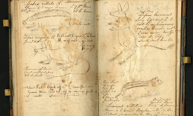 A page from Constantine Rafinesque's field notebook, with a 'big-eye jumping mouse', a 'lion-tail jumping mouse', a 'three-striped mole rat' and a 'brindled stamiter'. Photograph: Smithsonian Institution Archives. Image # SIA2012-6065.