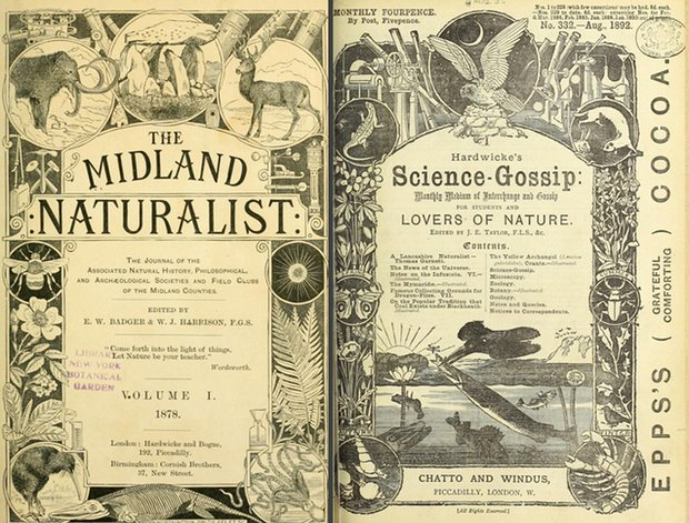 Frontispieces for the Midland Naturalist, 1878, and Science-Gossip, 1892. Photograph: Biodiversity Heritage Library/Public Domain