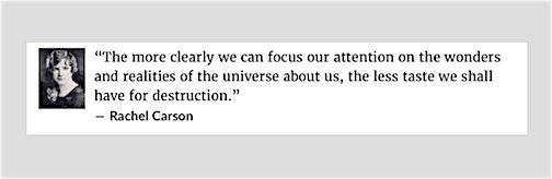 Carson quote