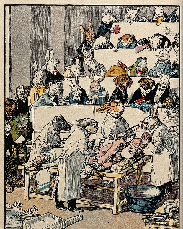 "Colour lithograph: ""human vivisection"", published in Lustige Blatter. Berlin, c. 1910. The rabbit says ""Now no phoney sentimentality! The principle of free research requires that I vivisect this human for the health of the entire animal world"". Illustration: Wellcome Library, London/Wellcome Images"