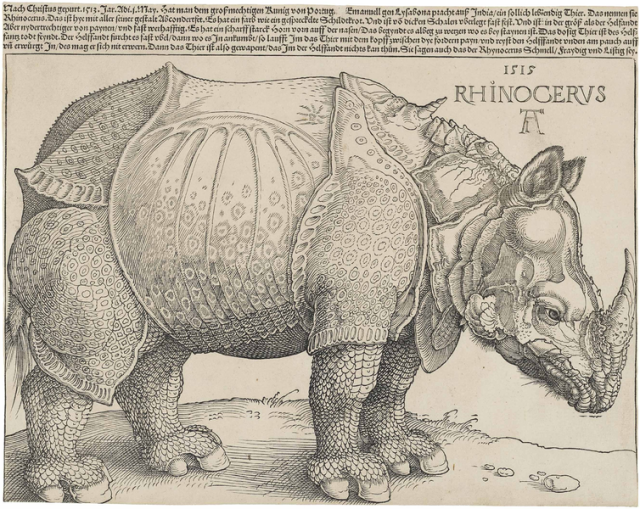 Dürer's Rhinoceros Source: Wikimedia Commons