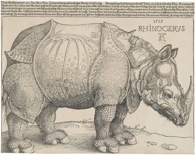 Dürer's Rhinoceros Source: Wikimedia Commons