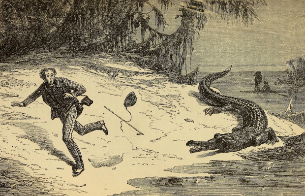 Chased by an Alligator, Reptiles and Birds, 1883.