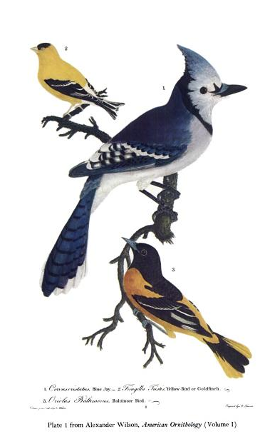 Wilson,_Plate_1,_Volume_1,_American_Ornithology.tiff
