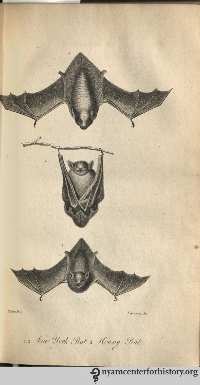 Bats from Volume I of Godman's American Natural History, 1826-1828.