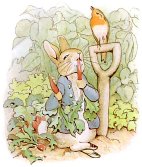 Illustration of Peter Rabbit eating radishes, from The Tale of Peter Rabbit Source: Wikimedia Commons