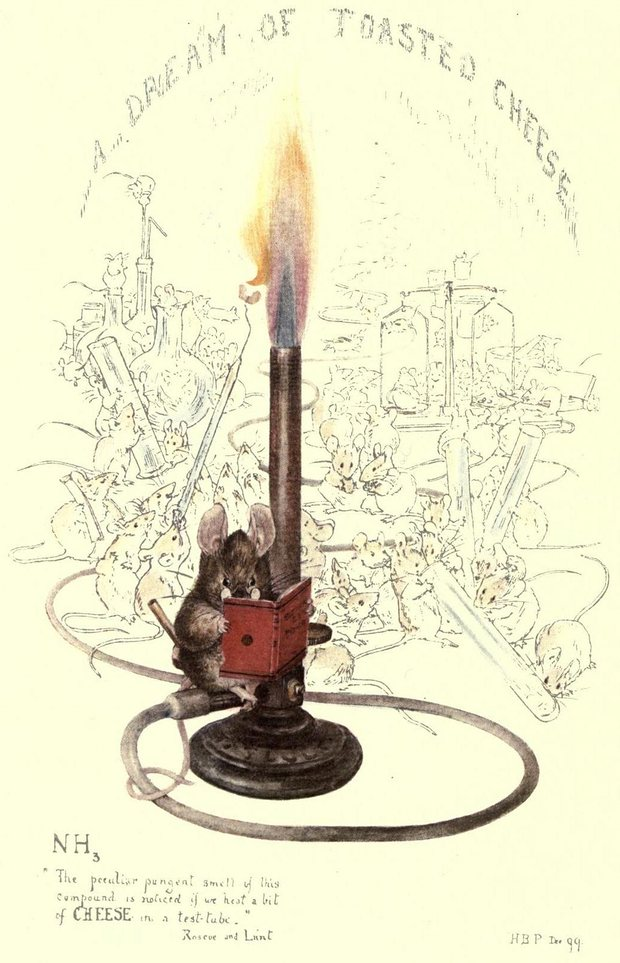 A rarely seen very early Beatrix Potter drawing, A Dream of Toasted Cheese was drawn to celebrate the publication of Henry Roscoe's chemistry textbook in 1899. Illustration: Beatrix Potter/reproduced courtesy of the Lord Clwyd collection