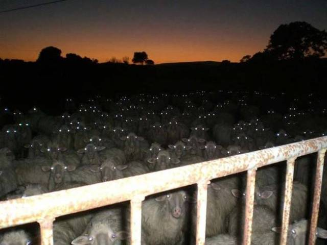 """Try counting sheep,"" they said. ""It'll help you fall asleep,"" they said – Shannon (@theevilwriter)"