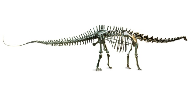 The 26 Metre Diplodocus Skeleton Is A Museum Icon And Has Been On Display For
