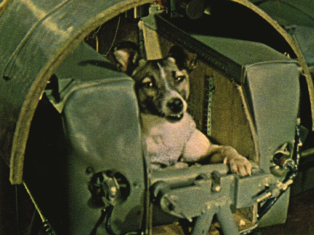 3 November 1957, space dog Laika became the first animal to orbit the Earth. She did not survive the Sputnik 2 flight h/t @cbquist