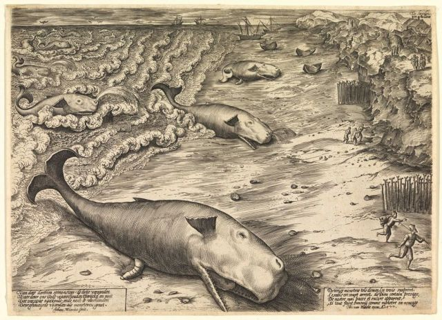 In 1577, Flemish artist Jan Wierix engraved Three Beached Whales, which depicts three stranded sperm whales.