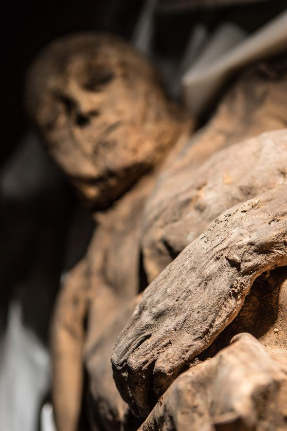 One of several naturally mummified bodies found in a church in Lithuania. The preserved partial body of a child found in the same crypt contains the oldest known sample of smallpox virus. PHOTOGRAPH BY KIRIL CACHOVSKIJ, DELFI