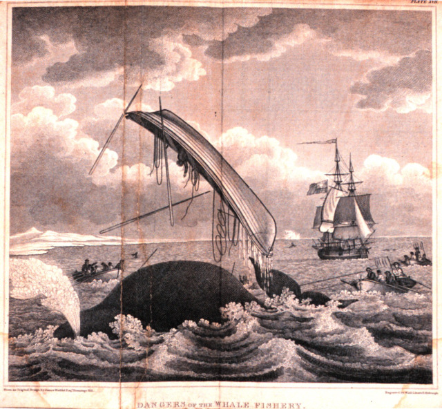 18th Century whaling could be dangerous!
