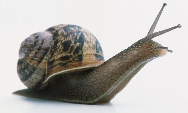 Browne initially thought snails did not have eyes - partly because they had four horns which appeared to be similar structures, and he thought it unlikely for any animal to have four eyes. Getty Images. Photograph: Getty Images
