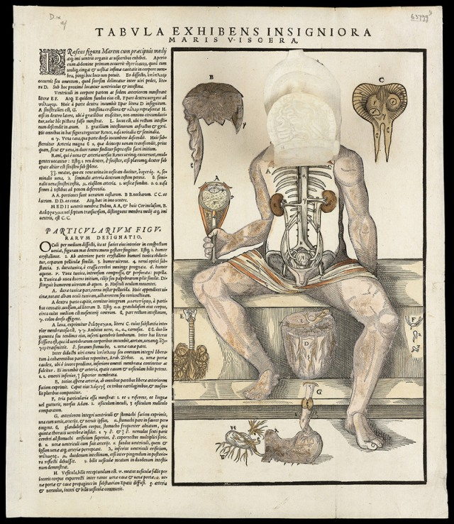 Anatomical fugitive sheets of a skeleton, male figure and a female figure, 1573. WELLCOME LIBRARY, LONDON/CC BY 4.0