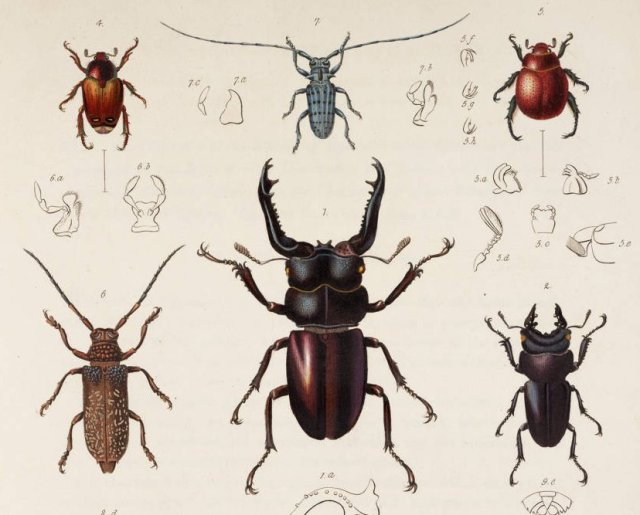 "Some nondescript insects from Assam""-described by F.W. Hope"