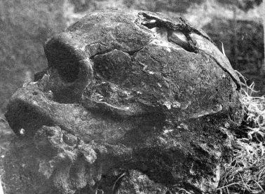 La Chapelle Skull