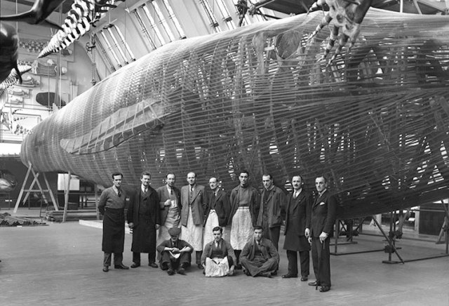 Staff stand in front of a blue whale model. In this photo, taken in the 1930s, the Whale Hall had only just opened.